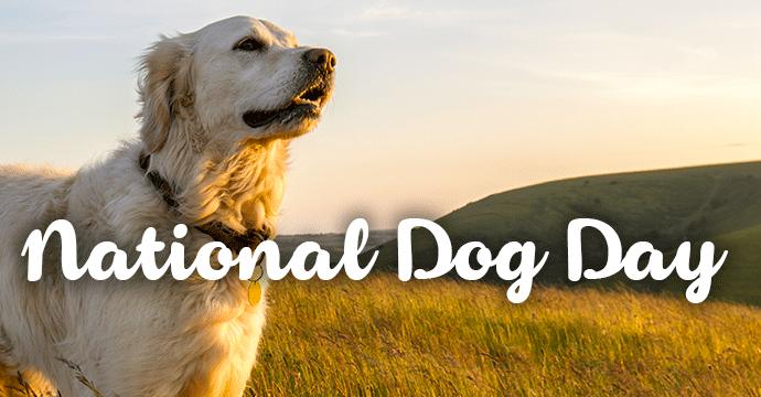 Image result for national dog day
